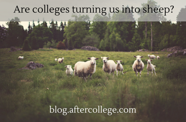 Are colleges turning us into sheep-